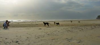 Fotógrafo, perros y la playa fotos de archivo