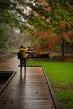Fotógrafo que toma imagens de árvores de bordo coloridas foto de stock