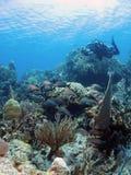 Fotógrafo subacuático foto de archivo