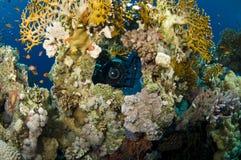 Fotógrafo subaquático Foto de Stock Royalty Free