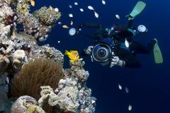 Fotógrafo subaquático Fotografia de Stock