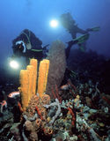 Fotógrafo subaquáticos Imagens de Stock