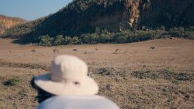 Fotógrafo Takes Pictures On a câmera de zebras selvagens na reserva africana video estoque