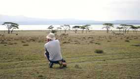 Fotógrafo Takes Pictures On a câmera de zebras selvagens na reserva africana filme