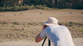 Fotógrafo Takes Pictures On la cámara de cebras salvajes en la reserva africana almacen de video