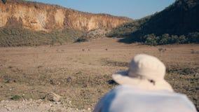 Fotógrafo Takes Pictures On la cámara de cebras salvajes en la reserva africana metrajes