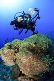 Fotógrafo y anémonas subacuáticos Fotos de archivo libres de regalías