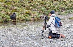 Fotógrafo y lobos marinos fotografía de archivo