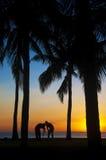 Fotógrafos de la puesta del sol fotografía de archivo