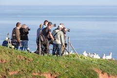 Fotógrafos que toman imágenes de Gannets septentrional en el isla alemán Foto de archivo