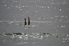 Fot över - vatten Royaltyfri Fotografi