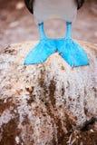Fot av den blåa footed dumskallen Royaltyfria Bilder
