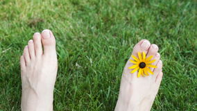 Fot av kvinnan på gräs med den gula blomman på äng arkivfilmer