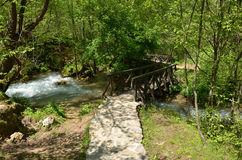 Fot- bro i en skog Royaltyfri Bild