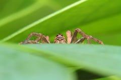 Fot hög spindel royaltyfria bilder