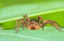 Fot hög spindel arkivbilder