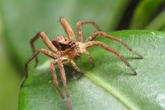Fot hög spindel arkivfoton