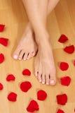 fot petals Arkivfoton