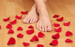 fot petals Fotografering för Bildbyråer