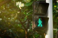 Fot- signaler på trafikljuspol Övergångsställe tecken för att kassaskåp ska gå i staden Övergångsställesignal Grön trafik royaltyfri foto