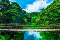 Fot- upphängningbro för bambu över floden Arkivfoton