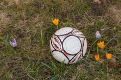 Fotball in the grass Stock Images