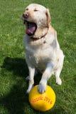 Fotboll för hundkapplöpning Royaltyfri Fotografi
