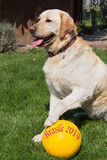 Fotboll för hundkapplöpning Arkivfoto