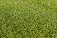 Fotboll Gräsmatta av världscupen 2018 Klipp exakt gräs arkivfoto