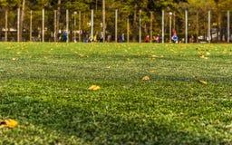 Fotbollfält som täckas med torra sidor Arkivfoto