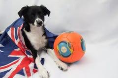 Fotbollhund med den australiska flaggan royaltyfri fotografi