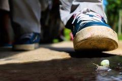 Foten med en snigel Fotografering för Bildbyråer