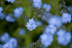 Fotget-je-non fleurs Photo stock