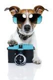 Fotógrafo do cão Foto de Stock Royalty Free
