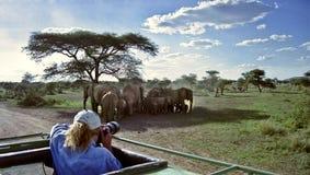 Fotógrafo dos animais selvagens Imagem de Stock Royalty Free
