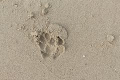 Fothund på sanden Arkivbild