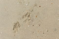 Fothund på sanden Royaltyfria Foton