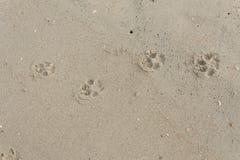 Fothund på sanden Arkivfoto