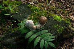 Foto在树桩的2只蜗牛在木头 库存照片