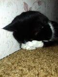 Foto кота очень красивое стоковое изображение