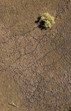 Foto aérea da linha de palma do pandanus na pastagem imagem de stock