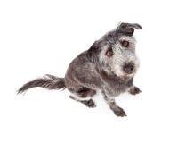 A foto aérea de Terrier misturou o cão da raça imagem de stock