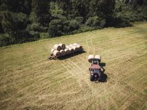 Foto aérea del abejón del granjero Harvesting Hay Rolls en el campo de trigo con un tractor rojo - Sunny Summer Day, apariencia v fotos de archivo