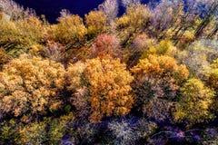 Foto aérea del vuelo sobre árboles en otoño con marrón de la paja Imagen de archivo
