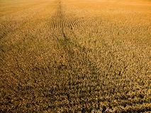 Foto aérea do zangão - exploração agrícola do milho de Illinois foto de stock