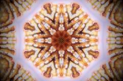 Foto abstrata da mandala do shell do mar Fotos de Stock