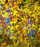 Foto abstrata das folhas de outono retroiluminadas Fotos de Stock