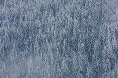 Foto aerea della valle del ghiacciaio e della foresta innevata f della foresta immagini stock