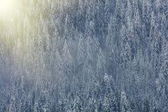Foto aerea della valle del ghiacciaio e della foresta innevata f della foresta immagine stock