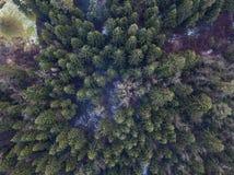 Foto aerea della valle del ghiacciaio e della foresta innevata f della foresta immagine stock libera da diritti